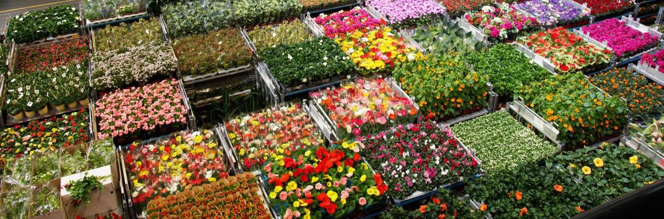 09flowers